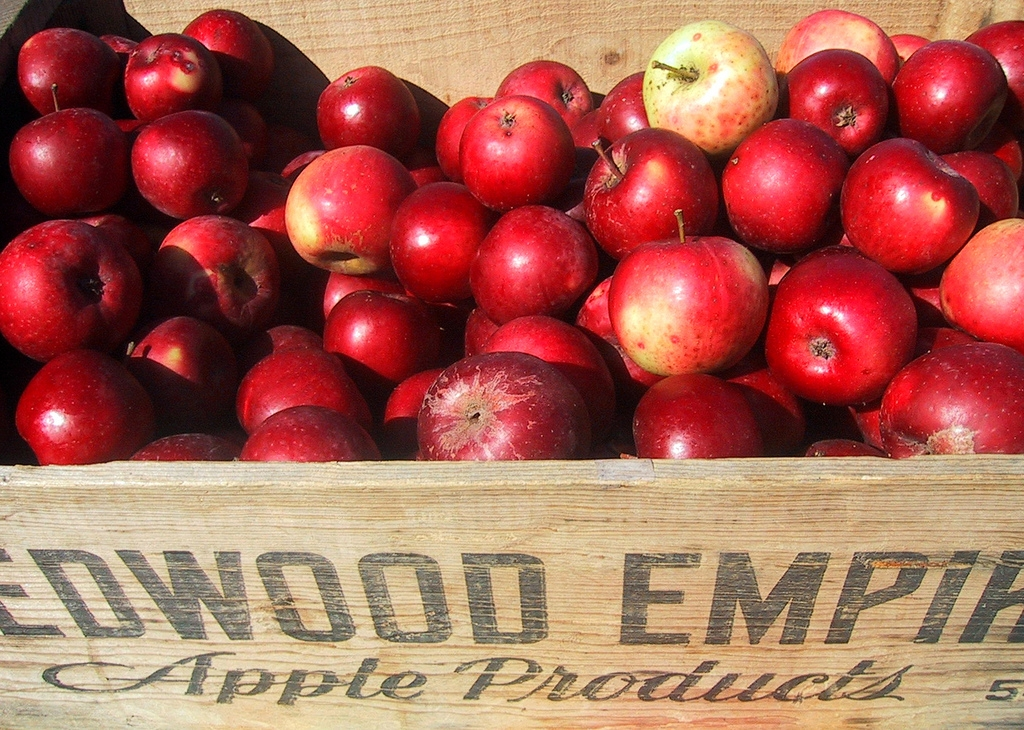 Organic Redwood apples by Yesica, Flickr