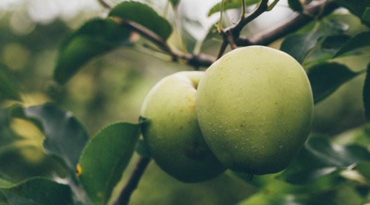 שני תפוחים
