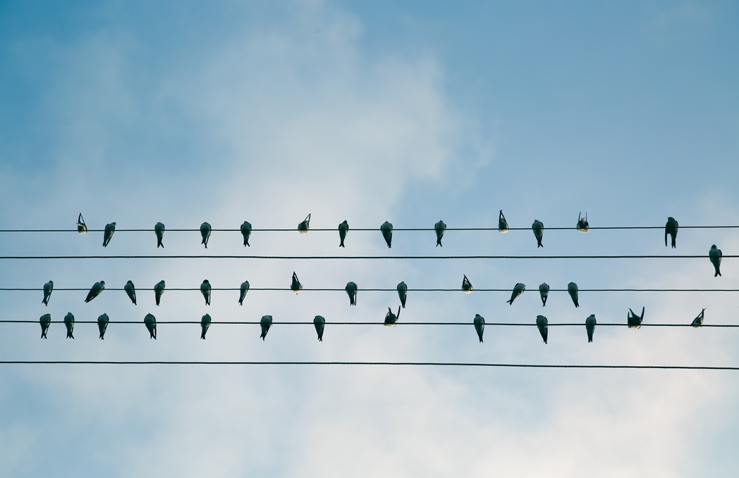 Living online: Birds on a wire