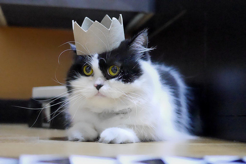 Bow down to your king, by travel oriented, Flickr